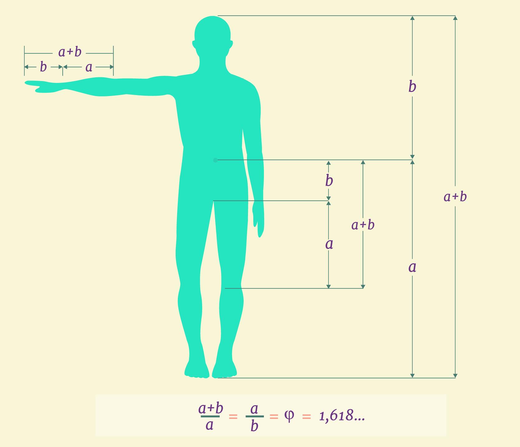 Silueta humana con medidas que conservan la proporción áurea