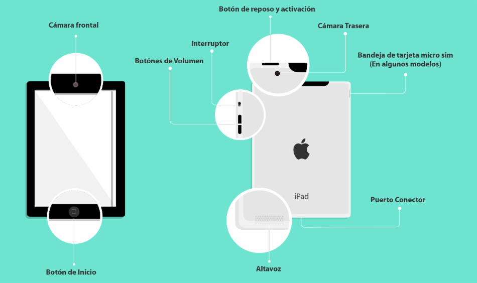 Partes del iPad
